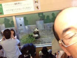 小西さんは無料開放日だった動物園へ。パンダ!!